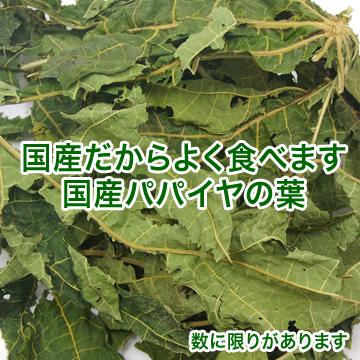 〔季節限定〕国産オリーブの葉と茎