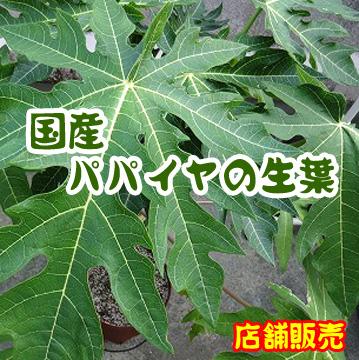 【店舗販売】国産 ブロッコリーの生葉