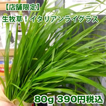 【店舗販売】新鮮生牧草 イタリアンライグラス 80g