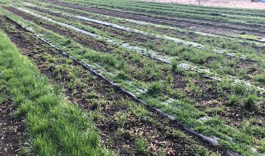究極の乾燥牧草の状態