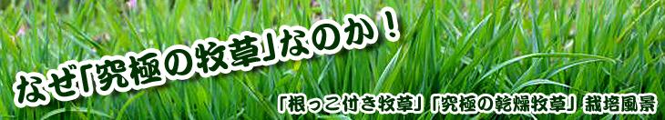 「根っこ付き牧草」「究極の乾燥牧草」栽培風景