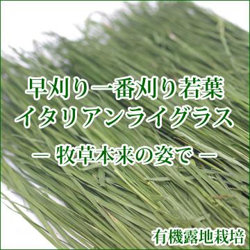 究極の乾燥牧草 そのままイタリアンライグラス 80g