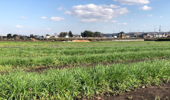 究極の牧草