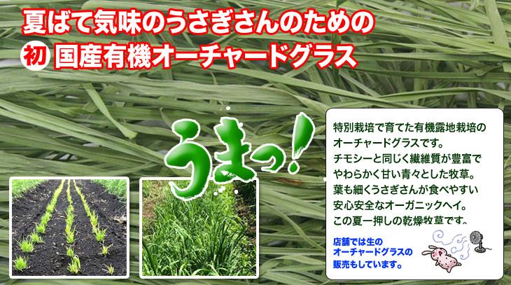 究極の乾燥牧草 オーチャードグラス