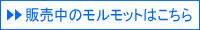 小岩ペット モルモット紹介