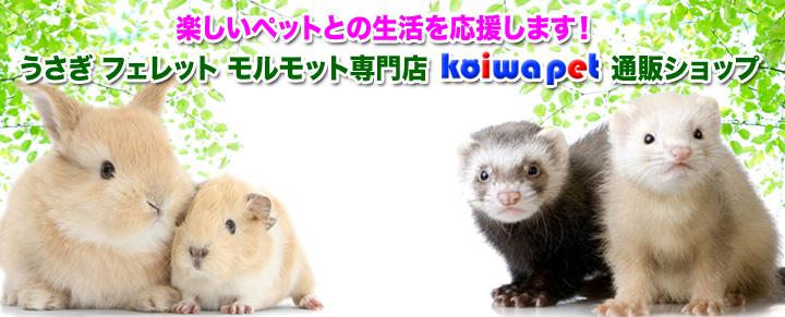 うさぎ・フェレット・モルモット専門店 小岩ペット