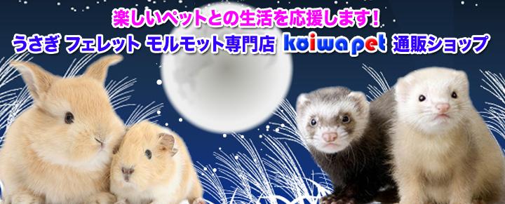 うさぎ・フェレット・モルモット専門店 小岩ペット通販ショップ