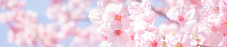 桜 バナー